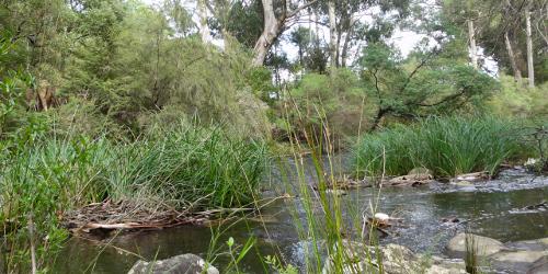 Yarra River, Milgrove